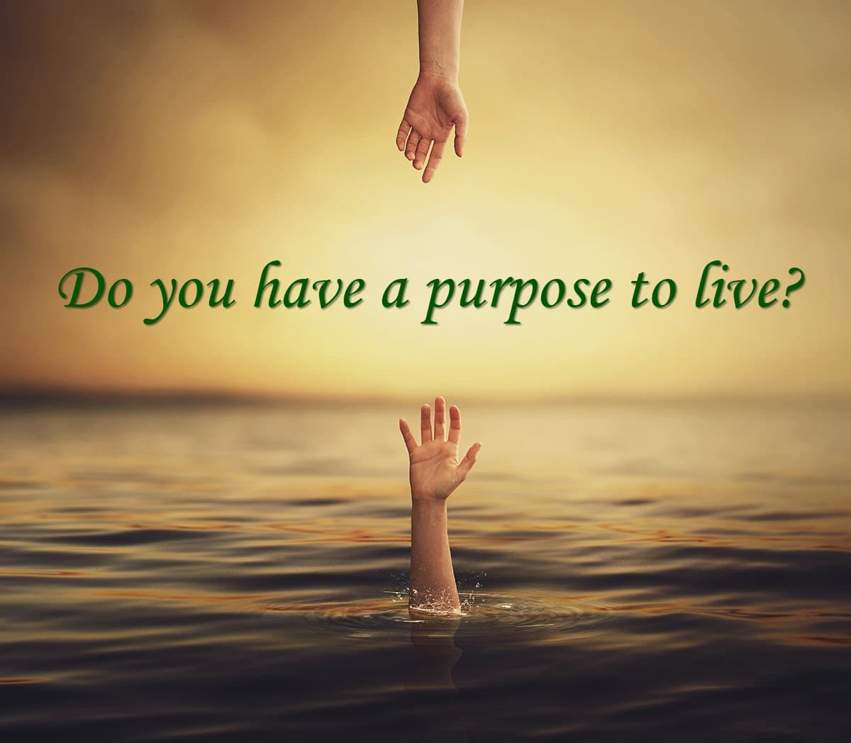 Do you have a purpose to live